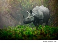 05 Nights 06 Days KAZIRANGA SHILLONG CHERRAPUNJEE